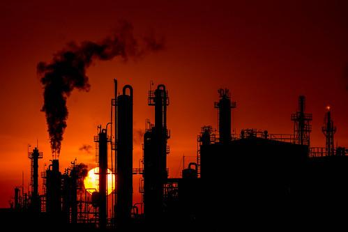 工業の影響で蛾の色が暗くなる「工業暗化」とは?