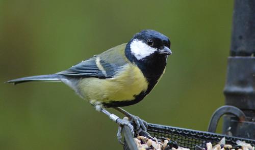 鳥類研究における「バンディング問題」