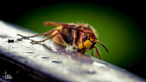 ハチに二度刺されるとなぜ危険なのか?
