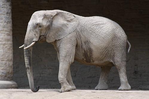 「ゾウの歯磨き粉」実験とは?