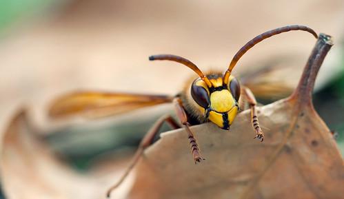ハチに刺された場合の対処法とは?