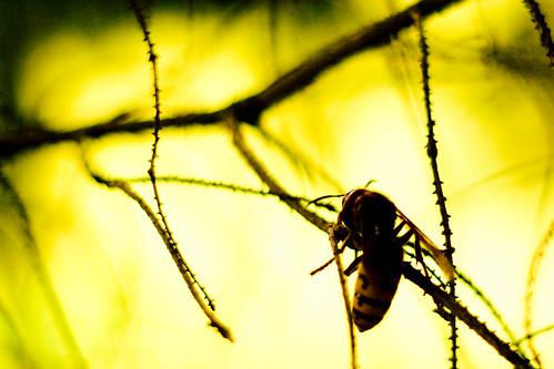 ハチに刺されたらおしっこをかける?