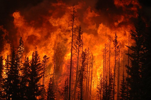 燃える大地に生きるオーストラリアの植物たち