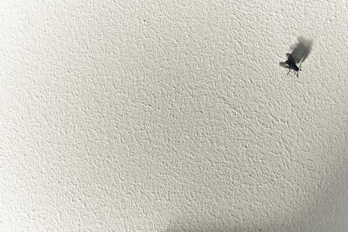 ハエが手をスリスリとすり合わせる理由とは?ハエが味を感じる仕組み