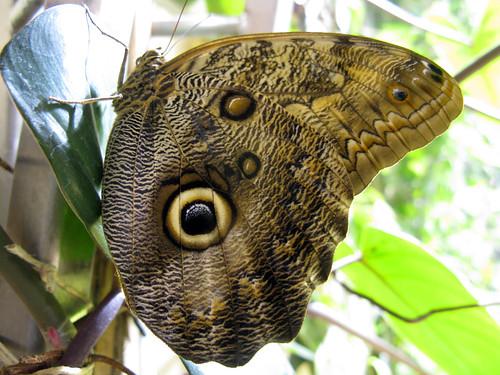 動物たちの不思議な目玉模様「眼状紋」とは?