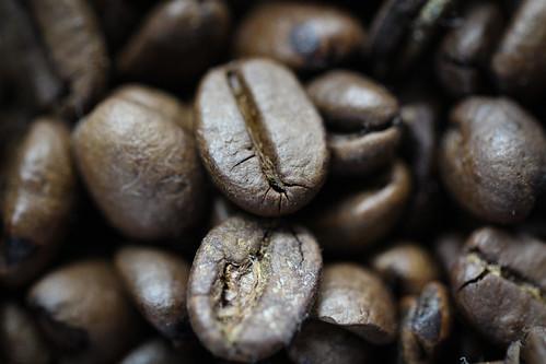 コーヒーの野生種が絶滅の危機、猛威を振るう「コーヒーさび病」