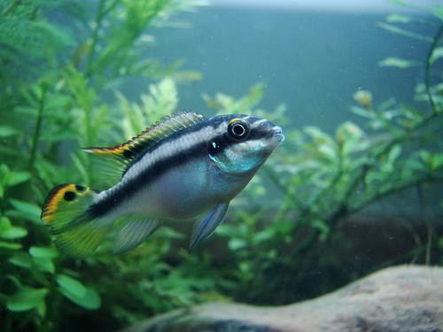 魚類も相手の顔に注目することが初めて明らかになる