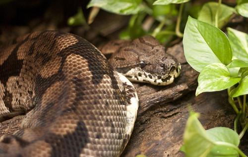 毒蛇は進化のなかで毒成分の配合を常に変化させ続けている