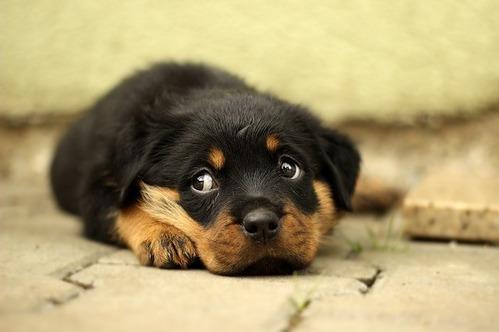 長く飼っている犬ほど飼い主に共感しやすくなる、麻布大学の共同研究