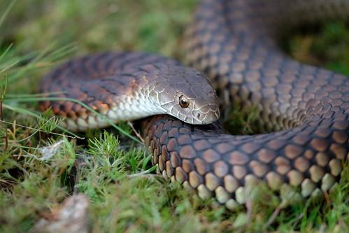 人間はヘビを素早く見つける能力が備わっている――ヘビ検出理論とは?