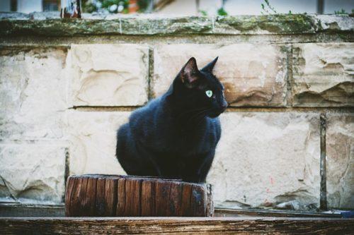 5年間行方不明の飼い猫が1,900km離れた場所で見つかる、マイクロチップが貢献