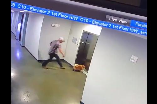 エレベーターで起きる犬の宙吊り事故、居合わせた男性が救助に成功