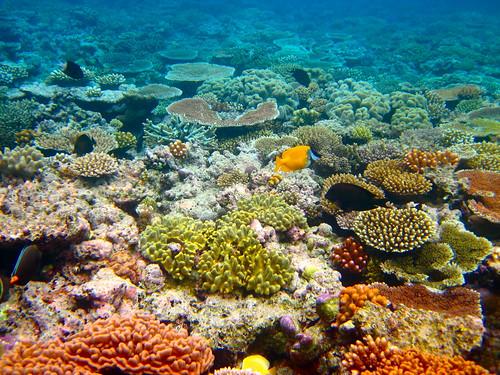 健康なサンゴ礁の「音」で魚を呼び戻し、生態系を取り戻す