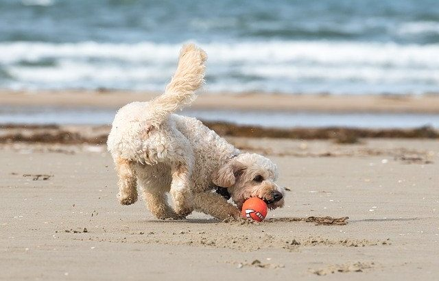 散歩中に飼い犬が海岸で魚竜の化石を発見、イギリス・サマセット州