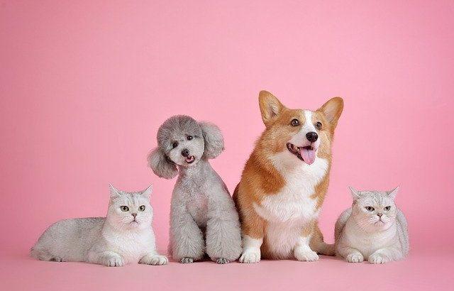 新型コロナウイルスは犬や猫にも感染するのか?