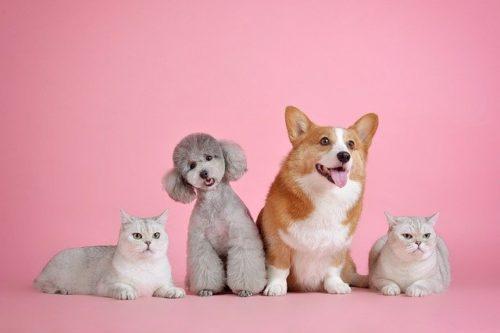 新型コロナウイルスは犬や猫にも感染する