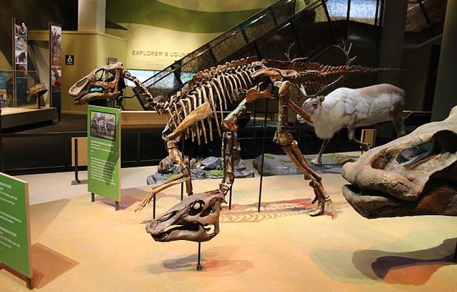 大人の化石がほとんど発見されない新種の恐竜、実は別の恐竜の仲間だった
