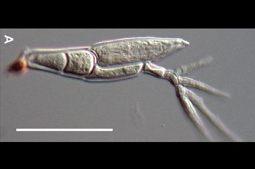 Twitterで共有されていた画像から菌類の新種を発見、コペンハーゲン大学