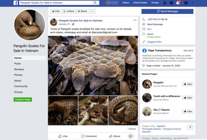 pangolins facebook