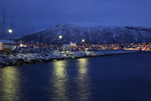 北極の海洋生物たちは船のわずかな光で行動が変化する、ノルウェー北極大学