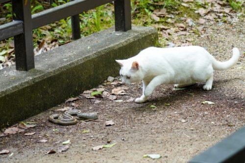 猫が毒ヘビに噛まれたときの生存率は犬の2倍