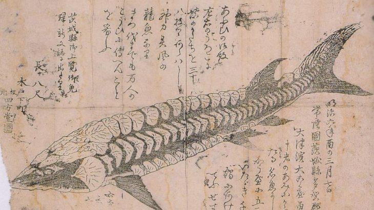 明治はじめ頃に網にかかった謎の魚「龍魚」の正体とは?