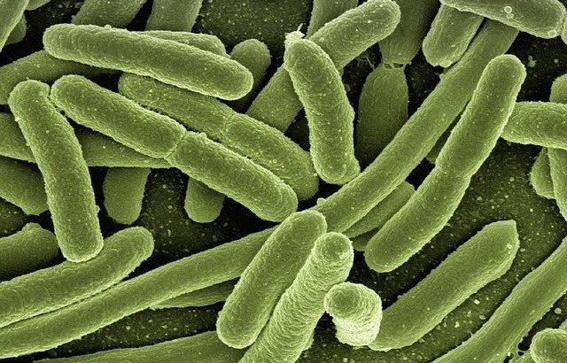 """どんな抗菌薬も通用しない""""悪夢の細菌""""に効果を発揮する化学物質を発見、名古屋大学"""