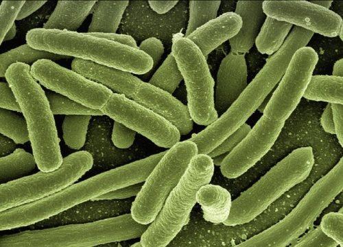 """最後の切り札さえ通用しない""""悪夢の細菌""""に効果を発揮する化学物質を発見"""
