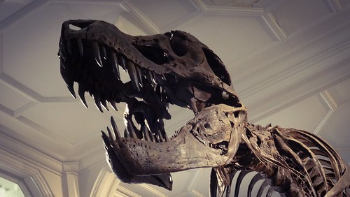 ティラノサウルスの全身骨格がオークションに出品される、推定落札額は8億円