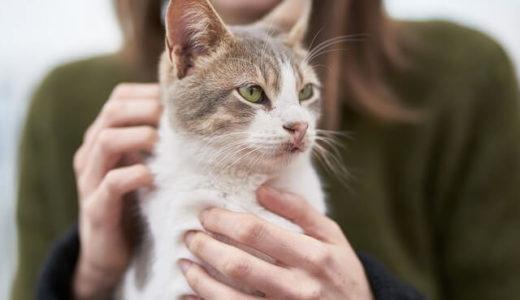 猫の飼い主はだいたい5つのタイプに分類できる、エクセター大学の研究