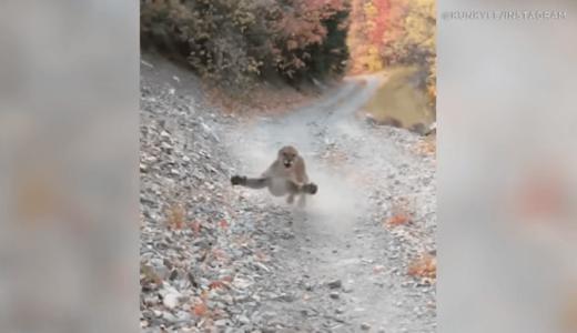 男性が山道でピューマと遭遇、緊迫の6分間を映した動画が公開される