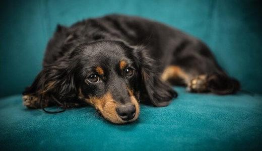 可愛い動物の動画を見ることでストレスや不安が軽減、イギリス・リーズ大学