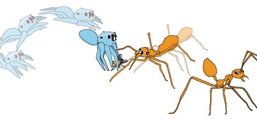 アリグモはアリに似すぎたせいで獲物を捕まえるのが難しい――兵庫県立大学・人と自然の博物館