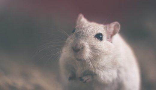 嫌な動画を毎日10分見続けたマウスは抑うつ症状が現れる、国立精神・神経医療研究センター