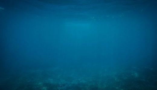 2003年に採集されたサメの標本から、世界で2例目となる大型ウオノエが発見される