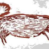 2017年に発見されたイノシシの洞窟壁画、「世界最古の動物画」であることが明らかに――グリフィス大学