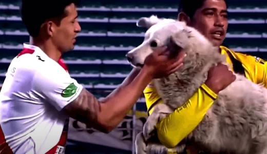 ボリビアで行われたプロサッカーの試合に犬が乱入、ロイターが報じる