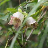 つるつる滑る花びらでアリだけを滑り落とす仕組みを発見――京都大学・東京大学