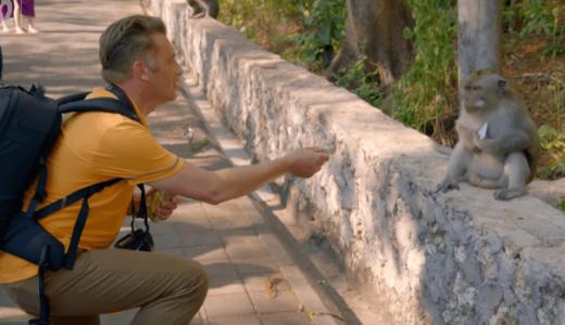 バリ島ウルワツ寺院周辺のサルは貴重品を強奪し、身代金としてエサを要求する――レスブリッジ大学、ウダヤナ大学