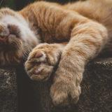 猫がマタタビ好きなのは寄生虫などを媒介する蚊を寄せ付けなくするため――京都大学・岩手大学・名古屋大学ら