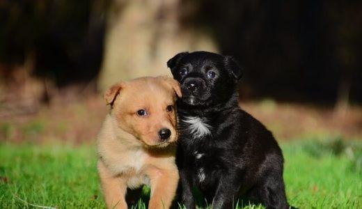 犬は飼い主の前だと他の犬とより仲良く活発に遊ぶ――アメリカ・モンマス大学