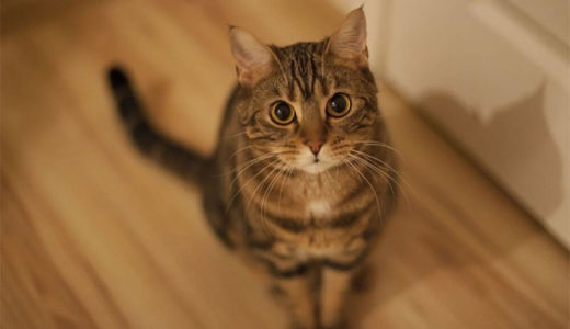 猫が虫やネズミなどを持ち帰る「お土産」は、遊んであげたりプレミアムフードを与えると減る――エクスター大学