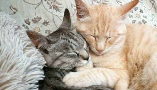 「結婚後も相手を大切する」遺伝子タイプを発見、相手と長続きしやすく幸せになりやすい傾向――アーカンソー大学