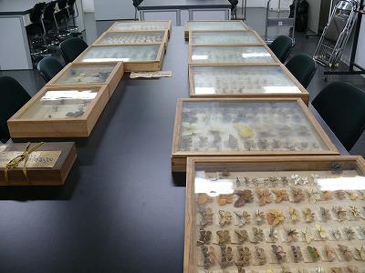 昭和天皇に献上されていた昆虫標本を発見、絶滅したチョウの標本も――国立科学博物館