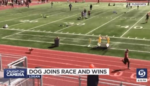 学校の陸上競技のレースに犬が乱入、トップを独走していた女子選手を追い抜き1位でゴール