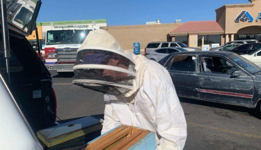 買い物から戻ると車の中に1万匹以上のハチ、養蜂家の消防士が駆除