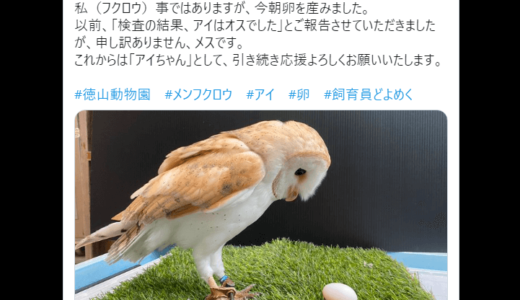 オスとされていたメンフクロウが産卵、メスであったことが明らかに――徳山動物園