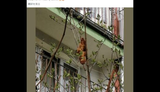 「木の上に見たこともない生物がいる」と通報、正体はクロワッサンだった