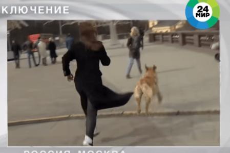 テレビ番組の生中継で犬がリポーターからマイクを奪って逃走――ロシア