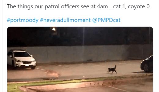 黒猫から必死に逃げるコヨーテ、カナダの警察が撮影して話題に